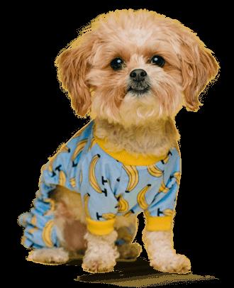 Karsten Puppy